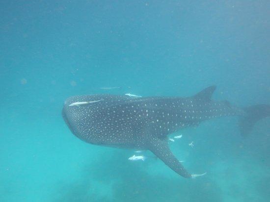 Mirihi Island Resort: the best consolation prize ever