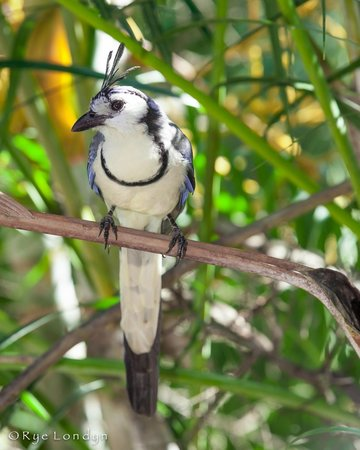 Cabinas Calocita : Calocita Bird