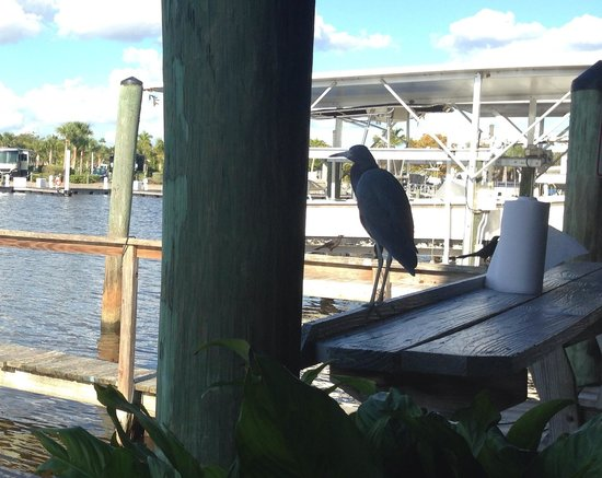 """City Seafood: """"Blue"""" the resident blue heron who hangs around the restaurant all day. The only bird you are al"""