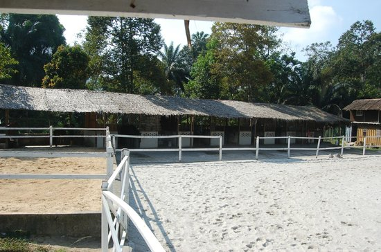 Taiping Equine Park: the horse stable
