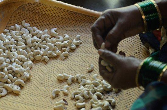 Atithi Parinay Homestay: Cashew Factory next to the property