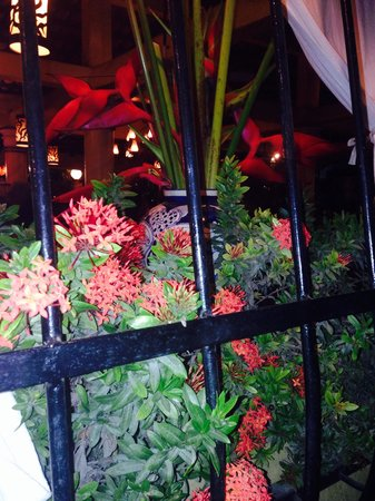 Mark's Bar and Grill : flowers in window