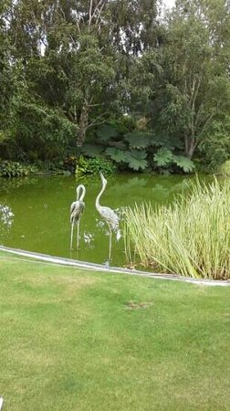 The beautiful reflection pond at Trotts Gardens in Ashburton.