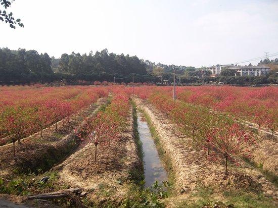 Southern Peach Garden Resort