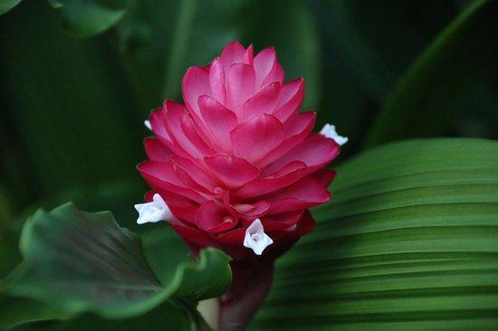 Casa Luna Hotel & Spa : Beautiful gardens on the property