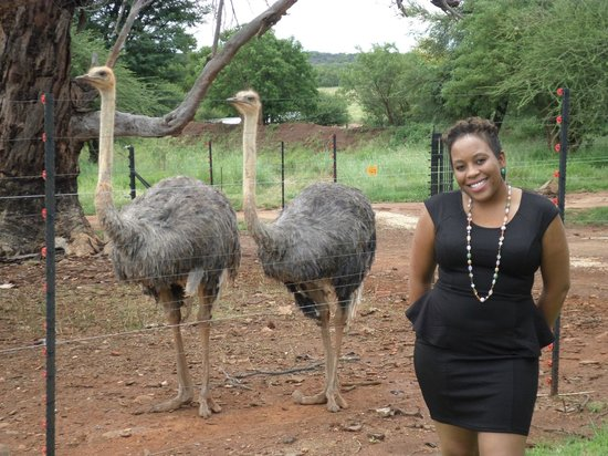 Akwaaba Lodge: Cute bird, and i'm not talking about the Ostriches. haha