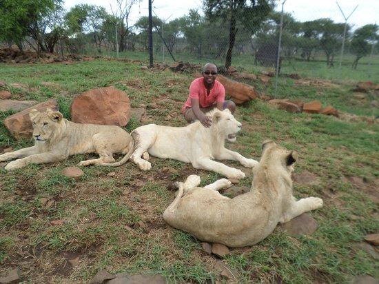 Akwaaba Lodge: My Daniel, in a lion's den