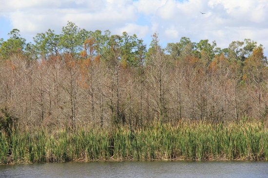 Six Mile Cypress Slough Preserve: 4