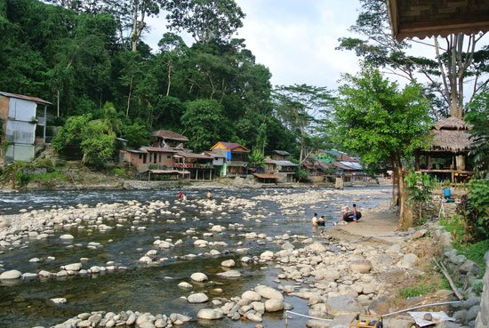 Thomas Jungle Tours - Day Tours: der Fluss