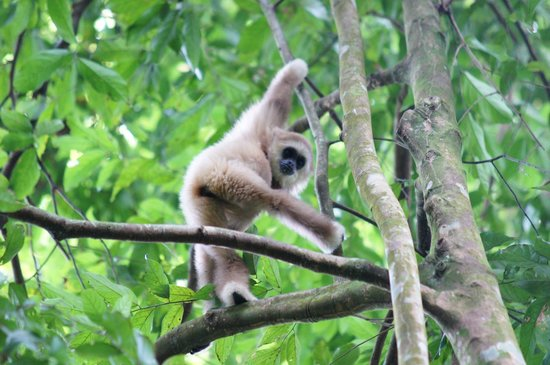 Thomas Jungle Tours - Day Tours: Plüschig:-)
