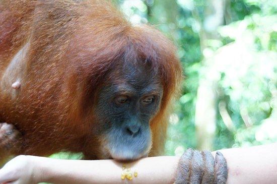 Thomas Jungle Tours - Day Tours: ...