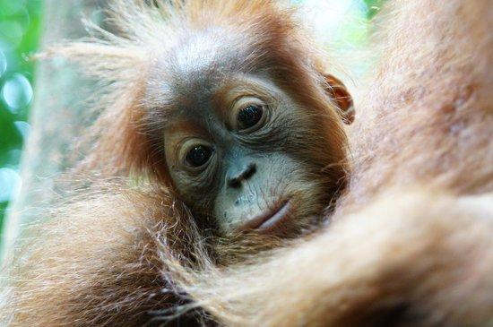 Thomas Jungle Tours - Day Tours: viele babys