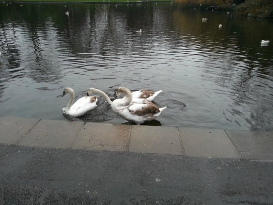 Parque St Stephen's Green: Residents of the Green