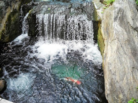 Asakusa Shrine: водопадик с рыбками