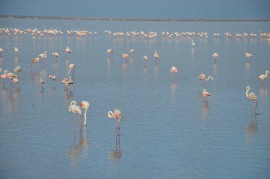 Eco Marine Kayak Tours: flamingos