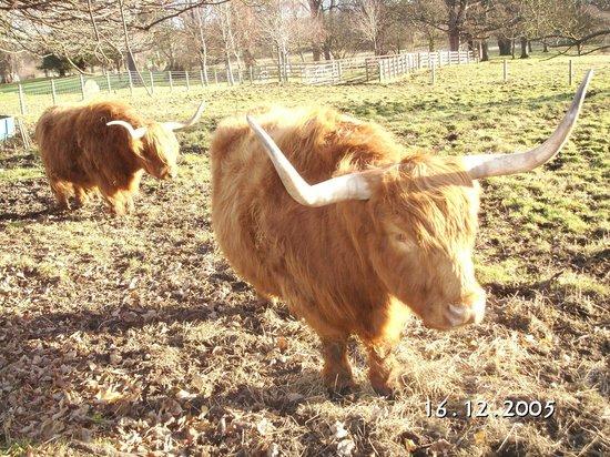 The Original London Sightseeing Tour : Ферма по разведению яков и буйволов