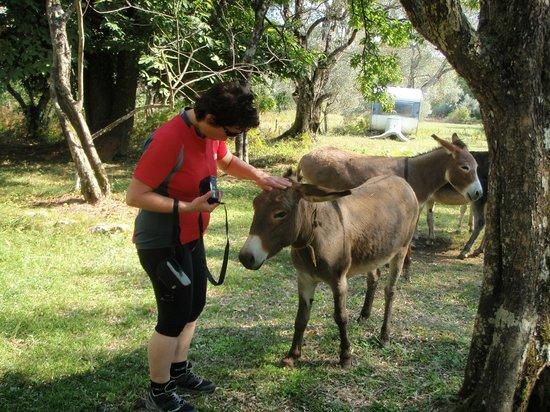 Hotel Pelikan: Auf der Strecke nach Albanien, Pause in Murici (Baden möglich, Eselfamilie unter den Bäumen)
