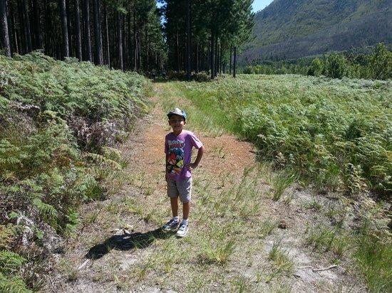 Tsitsikamma Lodge: trail