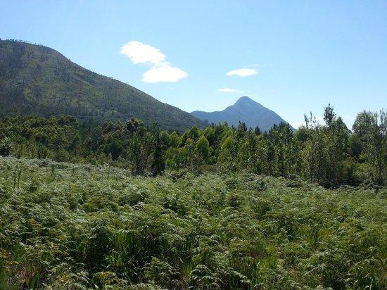 Tsitsikamma Lodge: view on the trail