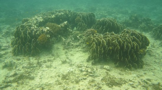 Padre Burgos Castle Resort: Snorkelling sights
