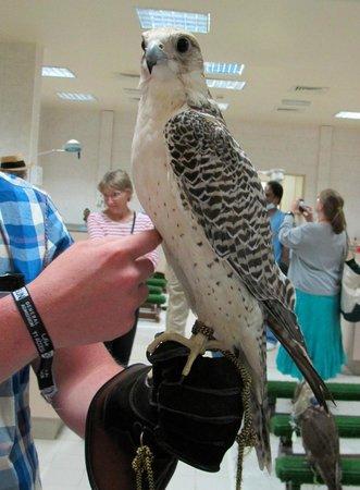 Abu Dhabi Falcon Hospital: Resident Jeer falcon