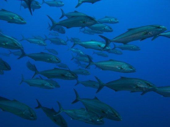 Diving Center Fornells: Reserva marina