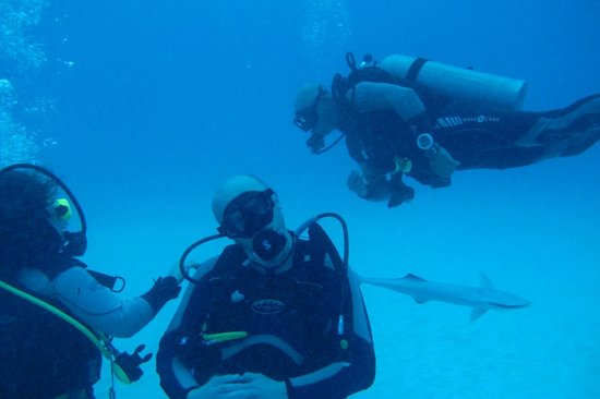 6 divers, 5 sharks. Divemex rocks!