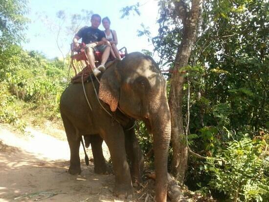 Amazing Bukit Safari: elephant trekking