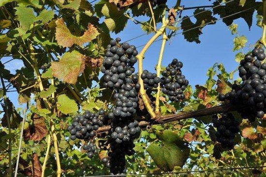 Wijngoed de Reestlandhoeve