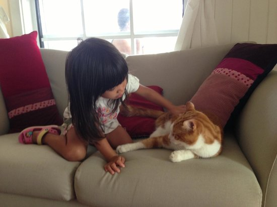 Huskisson Bed and Breakfast : My 3-year old just looved Chester!