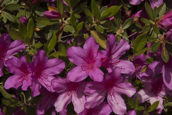 Blancarena Lab: flowers