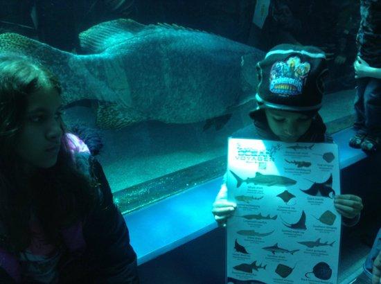 Georgia Aquarium: Estudando os peixes