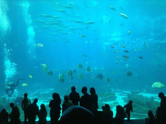 Georgia Aquarium: Visão magnífica do aquário!