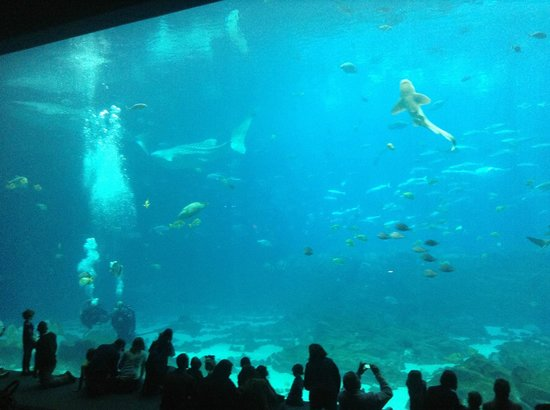 Georgia Aquarium: Visão do aquário