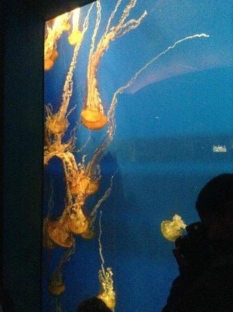Georgia Aquarium: Tanque de águas-vivas
