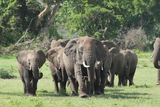 Singita Faru Faru Lodge: The herd elephants that were behind our room. We followed them after we met up with our guide Jo