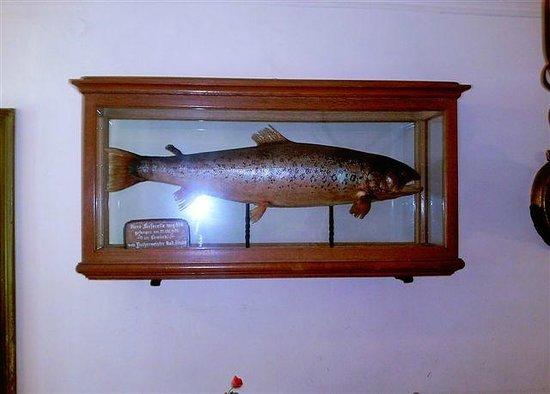 St. Bartholomä: Riesenforelle. Die größte je gefangene Forelle im Königssee