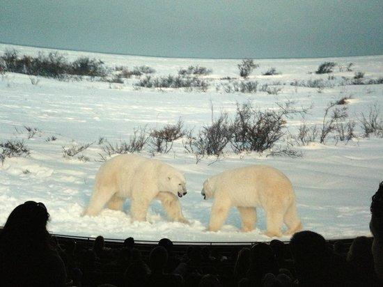 Fernbank Museum of Natural History: Imax, filme sobre ursos polares. Lindo!
