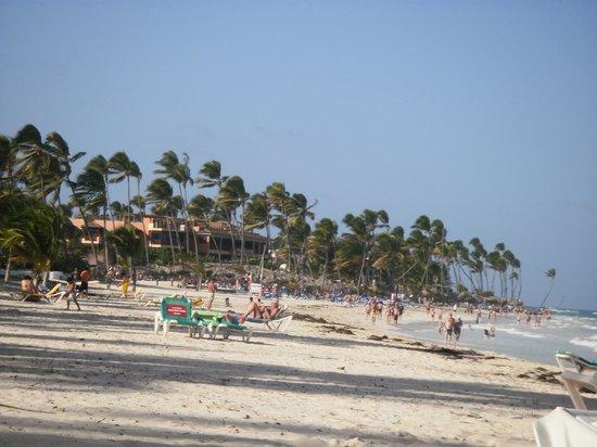 Tropical Princess Beach Resort & Spa: Beach n palms