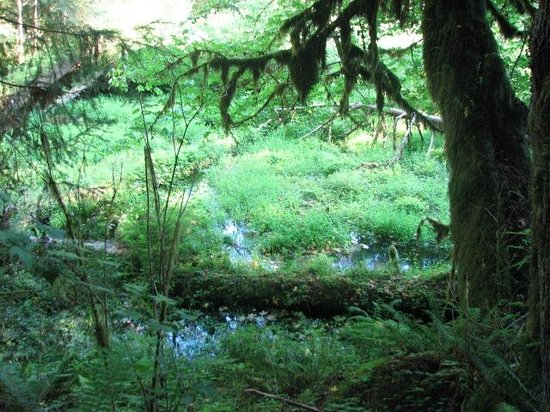 Hoh Rain Forest: Hoh Rainforest