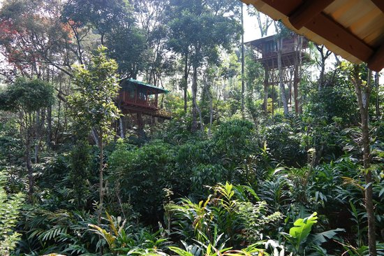 Dream Catcher Plantation Resort : the treehouses