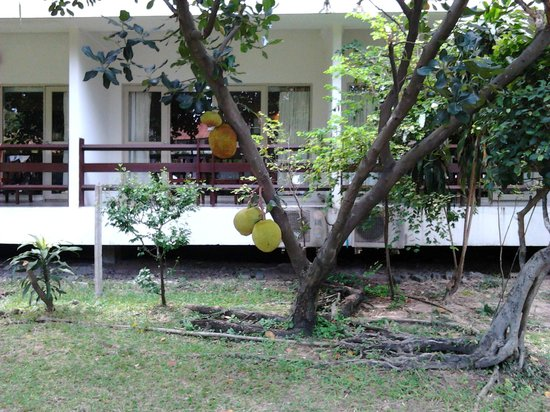 Sunshine Garden Resort: Корпус