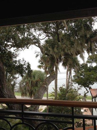 Black Dolphin Inn : live oaks outside