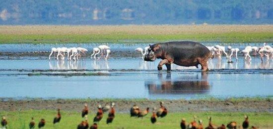Heritage Day Tours & Safaris : Isomangaliso Wetlands Park