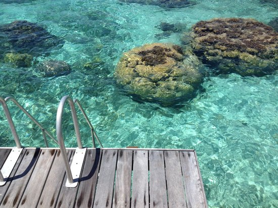 Sofitel Moorea Ia Ora Beach Resort: Steps from the deck down into the lagoon