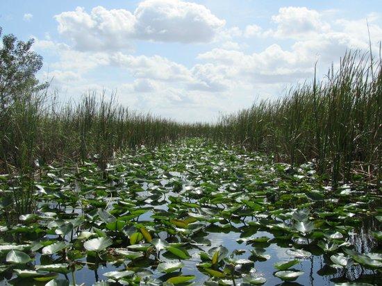Everglades Holiday park