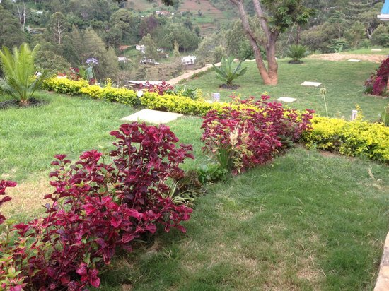 Avocado Lodge: Flower Garden at the lodge