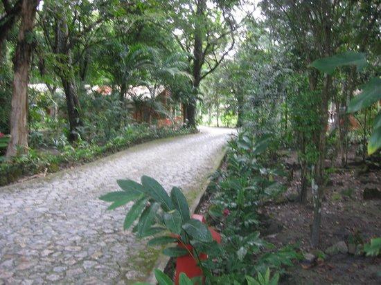 Jungle Lodge: Walk way to Tikal