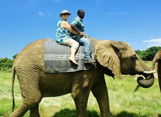 Elephant Sanctuary: Elephant Mama
