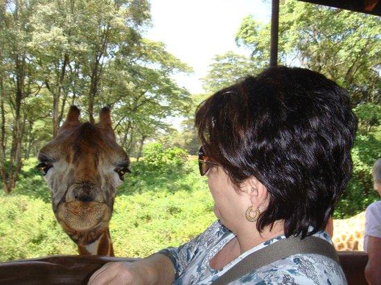 African Fund for Endangered Wildlife (Kenya) Ltd. - Giraffe Centre : La girafe Helen!